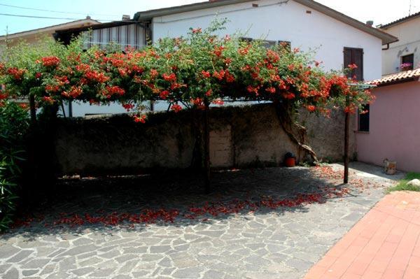 Vacanza Isola d'Elba: Leo